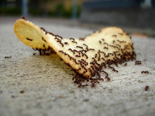 Trucos caseros contra las hormigas y otras plagas