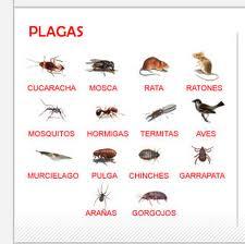 Las plagas más comunes que afectan a nuestro hogar